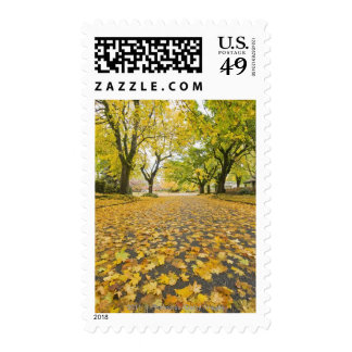Eastmoreland In Autumn road and tree view Stamp