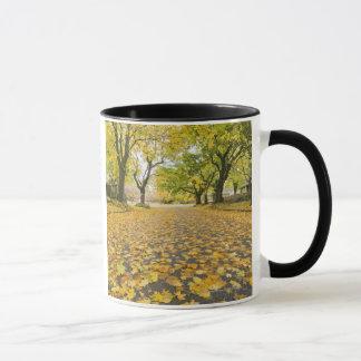 Eastmoreland Neighborhood In Autumn Mug