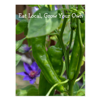 Eat Local...Hot Peppers! Postcard