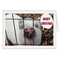 """EAT MORE CHICKEN AND MERRY CHRISTMAS FROM PIG CARD"
