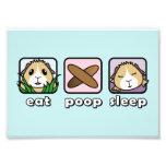 Eat Poop Sleep Guinea Pig Print (Frames Available) Art Photo