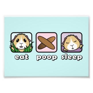 Eat Poop Sleep Guinea Pig Print (Frames Available) Photo Print