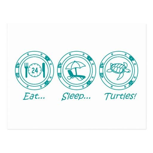Eat Sleep Turtles! Postcard