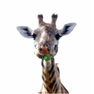 eating giraffe cutout