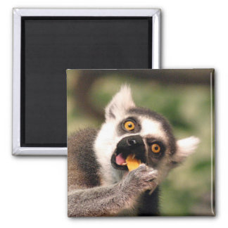 eating 2 inch square magnet