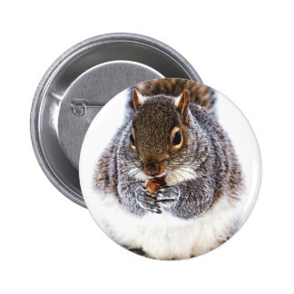 Eating Squirrel Button