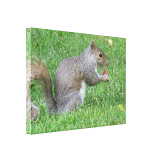Eating Squirrel Canvas Print