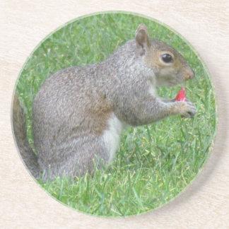 Eating Squirrel Coaster