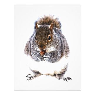 Eating Squirrel Letterhead