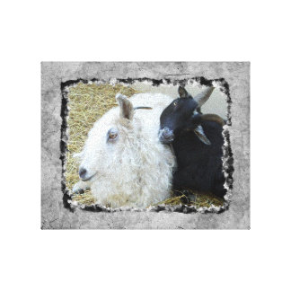 Ebony and Ivory Goat Buddies Canvas Print