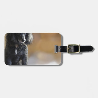 Ebony Travel Bag Tags