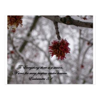Ecclesiastes 3:1 postcard