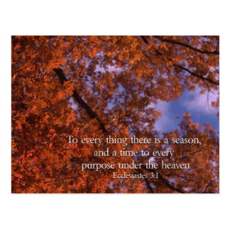 Ecclesiastes 3:1 To every thing there is a season Postcard