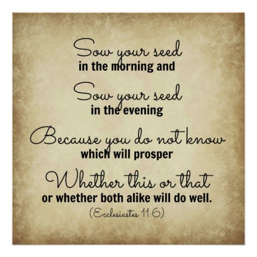 ecclesiastes bible verse sow your seed posters zazzle