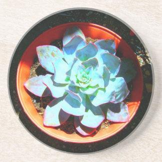 Echeveria Desert Plant Succulent Drink Coaster