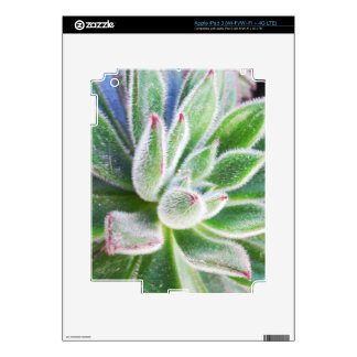 Echeveria harmsii decals for iPad 3