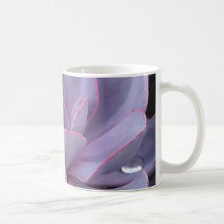 Echeveria 'Perle von Nurnberg' mug