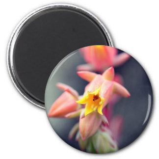 Echeveria Runyonii Habitus Inflorescences Magnet