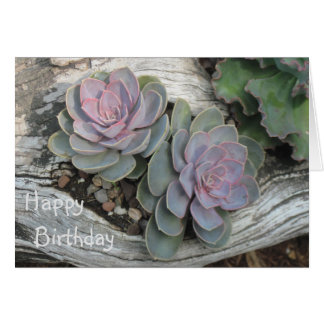 Echeveria Succulent Birthday Card