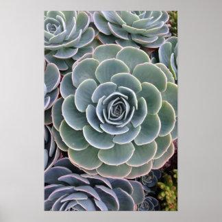 Echeveria Succulent Print