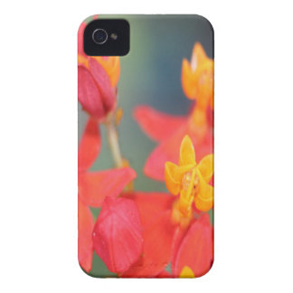 Echeveria Succulent Red and Yellow Flower iPhone 4 Case