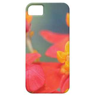 Echeveria Succulent Red and Yellow Flower iPhone SE/5/5s Case