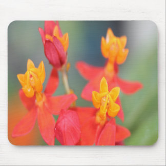 Echeveria Succulent Red and Yellow Flower Mouse Pad