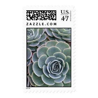 Echeveria Succulent Stamp