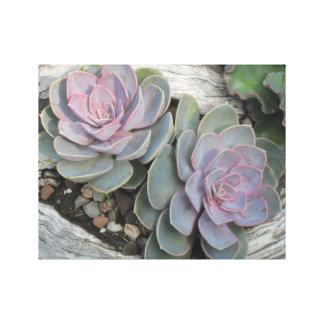 Echeveria Succulent Wrapped Canvas