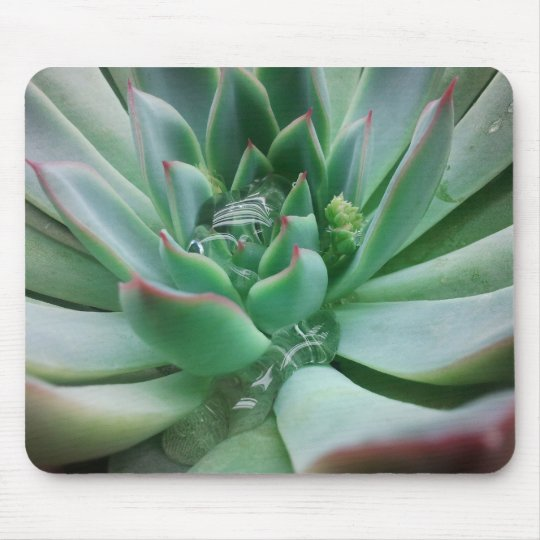 """Echeveria """"Tippy Mouse Pad"""