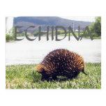 ECHIDNA POST CARD