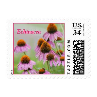 Echinacea-1 postage stamp- customize