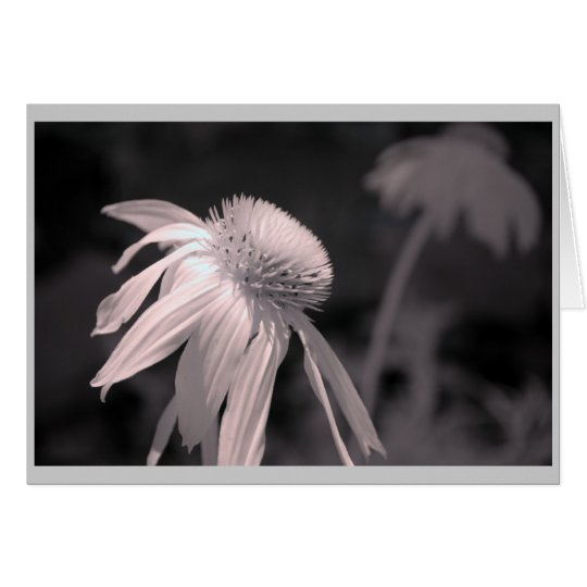 Echinacea Blooms Card