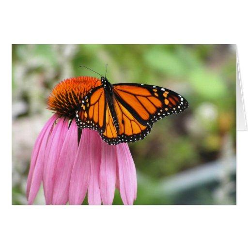 Echinacea con la mariposa de monarca tarjeta de felicitación