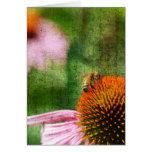Echinacea del verano tarjetón