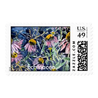 echinacea, Echinacea cone flower Postage