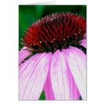 Echinacea, flor del cono tarjetas