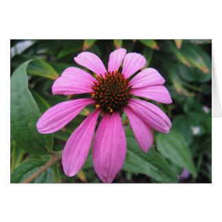 Echinacea flower card