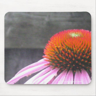 Echinacea in the Suburbs Mouse Pad
