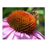 Echinacea Inspiration Postcard