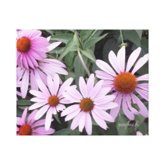 """Echinacea jjhelene Wrapped Canvas 20"""" x 16"""""""