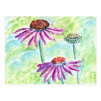 Echinacea, lápiz de la acuarela tarjeta postal