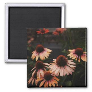 Echinacea 'Mama Mia' High Line Flowers Magnet