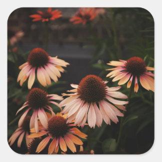 Echinacea 'Mama Mia' High Line Flowers Square Sticker
