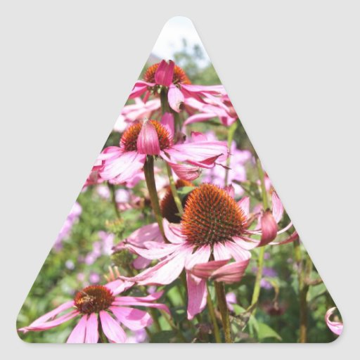 Echinacea, purple flowers close up triangle sticker