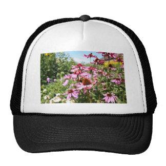 Echinacea, purple flowers close up trucker hat
