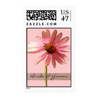 Echinacea purpurea postage