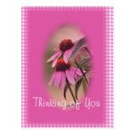 Echinacea & Seersucker Postcard- personalize