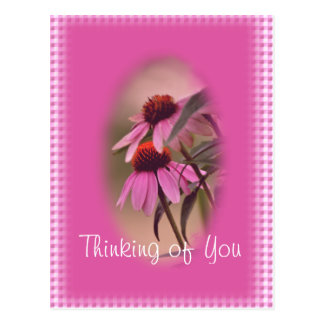 Echinacea & Seersucker Postcard- personalize Postcard