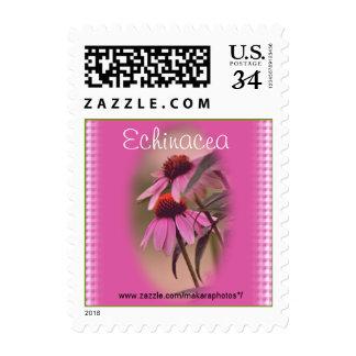 Echinacea & Seersucker Stamp- personalize Postage